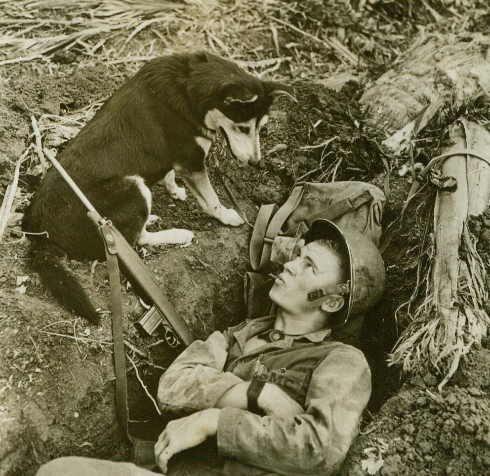 How About Moving Over, Bud?, 8/8/1944. GUAM - This Husky, of the War Scouting Dogs, looks like he'd like a little share of that foxhole, comfortably occupied by a U.S. Marine on Guam. Dogs are valuable scouts for the leathernecks during the daytime, and excellent outposts at night.;